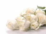 b_300_200_16777215_00_images_istnpra_10055cool-white-roses-wallpapers.jpg - Нотариальная палата