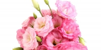 b_300_200_16777215_00_images_Bouquets_Eustoma_Pink_476760.jpg - Нотариальная палата